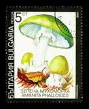 Phalloides d'amanite de chapeau de mort, serie de champignons, vers 1990 Photo libre de droits