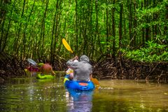 Group of tourists kayaking in the mangrove jungle Royalty Free Stock Photo