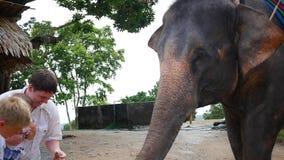 Phangan, Tailândia As trocas de carícias da família o elefante e alimentam-lhe bananas video estoque