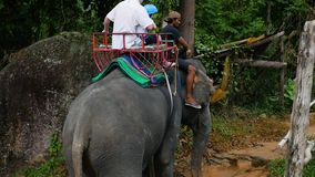PHANGAN, THAILAND - March 30,2017: The family riding on elephants in the tropical forest stock video