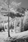 Phantasticwereld van Zwart-wit Bomen Royalty-vrije Stock Foto