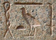 Pharaoh language. Scribes on marble stone in Cairo. Egypt background Stock Photos