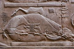Pharaohs arts at Luxpr temple. Pharaonic inscriptions Luxor Temple Luxor, Egypt Royalty Free Stock Photography