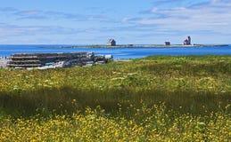 Phare d'île de fleur, Terre-Neuve Photographie stock
