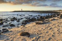 Phare dans les îles de Galapagos images stock