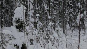 Phare de Tolbukhin dans le r?cif du golfe de Finlande et de fort Monticules de glace banque de vidéos