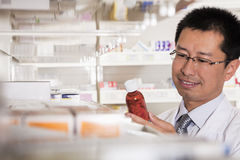 Pharmacist taking down and examining prescription medication in a pharmacy Royalty Free Stock Images