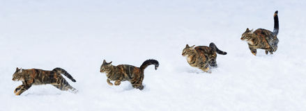 Phase run and jump kitten on snow Royalty Free Stock Images