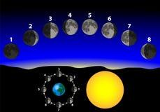 Phasen des Mondes Stockfoto
