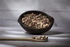 Phaseolus vulgaris Cranberry Group- bean cargamanto white stock images