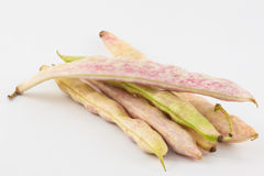 Phaseolus vulgaris non mûr de haricots communs Image stock