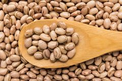 Pinto Bean legume. Grains in wooden spoon. Close up. Phaseolus vulgaris is scientific name of Pinto Bean legume. Also known as Frijol Pinto and Feijao Carioca Stock Photo
