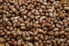 Carioca Beans into a bowl. Agriculture, seed. Phaseolus vulgaris is scientific name of Pinto Bean legume. Also known as Frijol Pinto and Feijao Carioca. Closeup royalty free stock photos