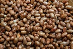 Carioca Beans into a bowl. Agriculture, seed. Phaseolus vulgaris is scientific name of Pinto Bean legume. Also known as Frijol Pinto and Feijao Carioca. Closeup stock images