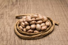 Pinto Bean legume. Paper rope around grain. Selective focus. Phaseolus vulgaris is scientific name of Pinto Bean legume. Also known as Frijol Pinto and Feijao Royalty Free Stock Photography