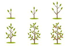 Phases de croissance d'arbre illustration stock