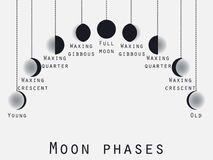 The phases of the moon. Lunar phase. Moon stages. Vector. Illustration Stock Image