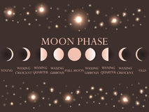 The phases of the moon. The whole cycle from new moon to full. Vector illustration vector illustration