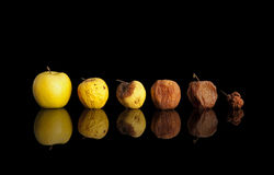 Phases of the rotting yellow apple. Phases of the rotting yellow apple isolated on black Royalty Free Stock Photo
