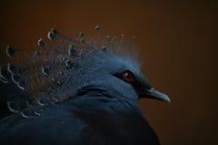 Pheasant. 2 Royalty Free Stock Image