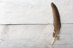 Pheasant Feather On Wood Royalty Free Stock Photography