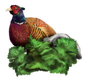 Pheasant in the grass. At Stone Stock Photo
