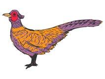Pheasant. Hand drawn, sketch, cartoon illustration of pheasant Stock Photography