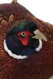 Pheasant Royalty Free Stock Photos