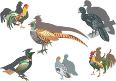 Pheasant and other birds Stock Images