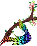 Pheasant. Painted in the colors of the rainbow Royalty Free Stock Photo