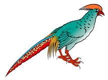 Pheasant painting Stock Image