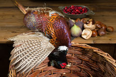 Pheasant preparation. Wild pheasant and fruit in an old master hunting still life Royalty Free Stock Photos