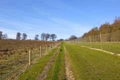 Pheasant shooting landscape. A footpath trough pheasant shooting enclosures with fences and young trees under a blue cloudy sky in a yorkshire wolds landscape in royalty free stock images