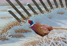 Pheasant in the Snow. A beautiful male Ring- necked pheasant in the snow illustrated by Steven Russell Smith Stock Image