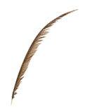 Pheasant tail feather Stock Photo