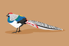 Pheasant. Vector Illustration Stock Image