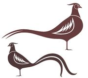 Pheasant. Vector illustration (EPS 10 Royalty Free Stock Images