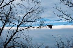 Pheasantflyg i skyen royaltyfri foto