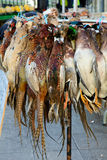 Pheasants and ducks for sale Stock Images