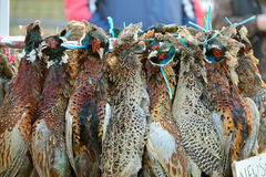 Pheasants and ducks for sale Stock Image