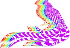 Pheasants Stock Photography