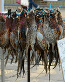 Pheasants for sale Stock Image