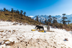 Phedang在Kanchenjunga国家公园的观点 免版税图库摄影