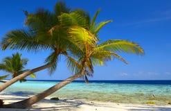 Phenomenal beach with and bird. Phenomenal beach with palm trees in Indian Ocean, Maldive island, Filiteyo Royalty Free Stock Photos