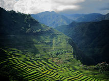 Phenomenal rice terraces in Batad, the Phillippines Stock Images