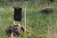 Pheromone  trap for bark beetle in grass on  meadow near forest Stock Photo