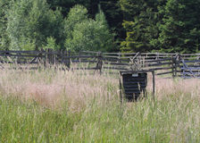Pheromone  trap for bark beetle in grass on  meadow near forest Stock Photography