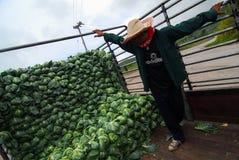PHETCHABUN TAJLANDIA, CZERWIEC - 24: średniorolnej pracy organicznie kapuściany arra Obrazy Stock