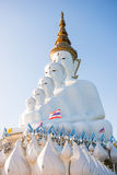Phetchabun, Thailand - November 27, 2016 :Beautiful White Big Bu Royalty Free Stock Photo
