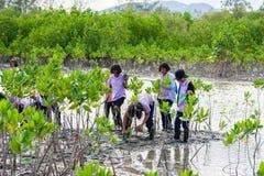 Phetchaburi泰国, 6月9日:泰国在d的学生植物年轻树 库存照片